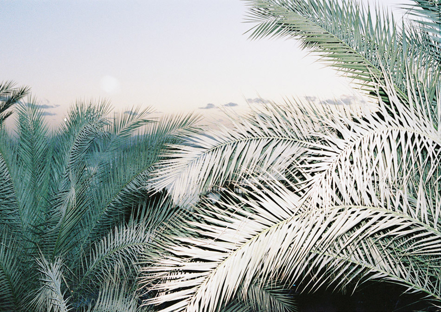 palms-light-day-via-sunday-kid-tumblr