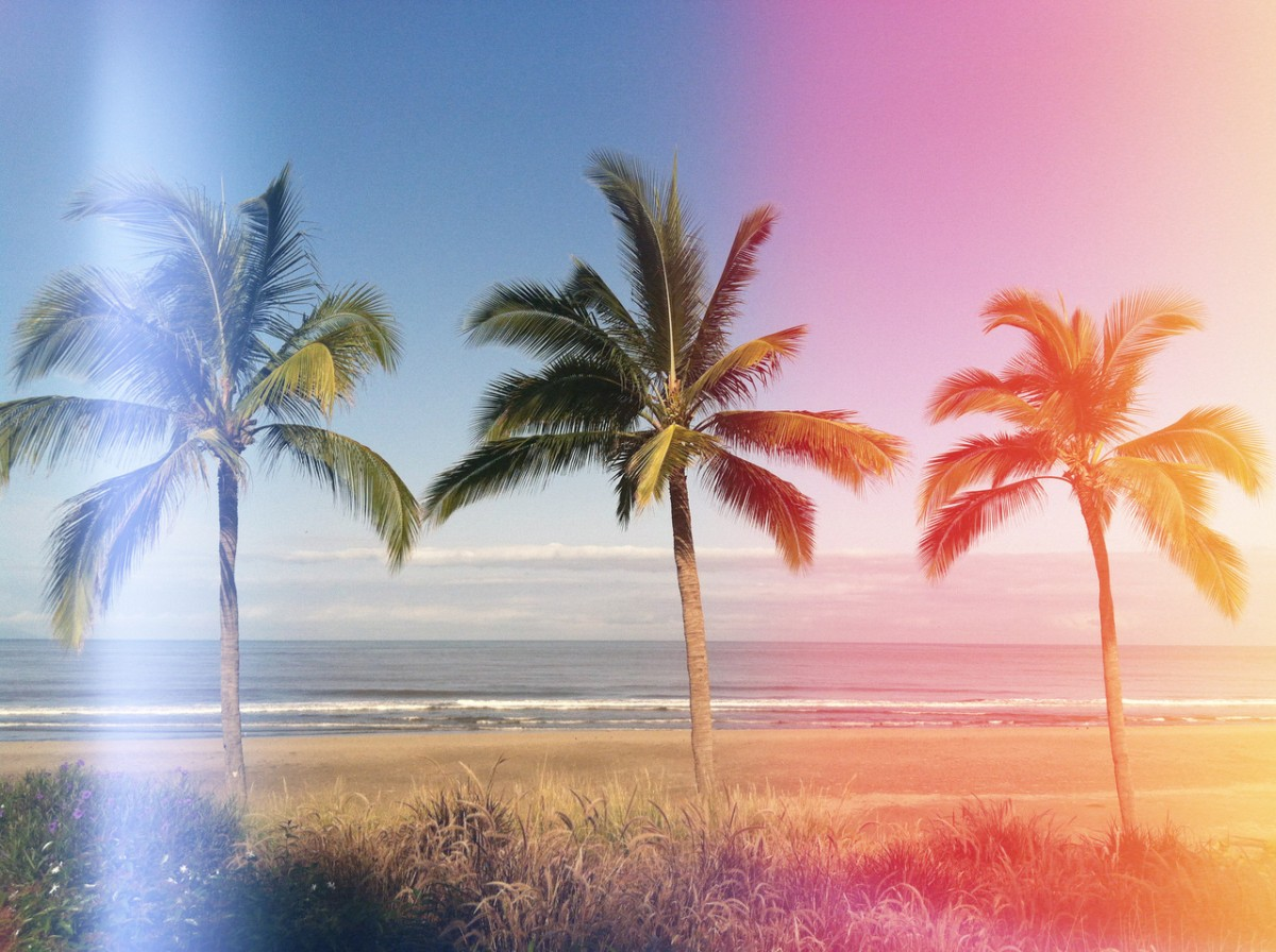 tumblr_static_3_palm_trees